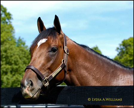 Barbaro at Fair Hill - Photo by Lydia A. Williams
