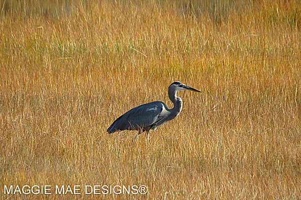Blog-Bird10