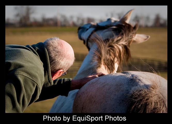 Blog-BullIntheHeather2-Horse-MattWooley-Framed