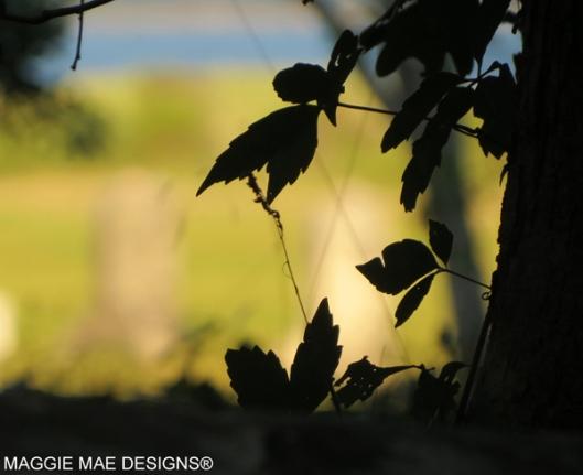 Blog-ForestBeachLoop5